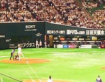 野球観戦写真